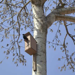 Biocomposite bird house